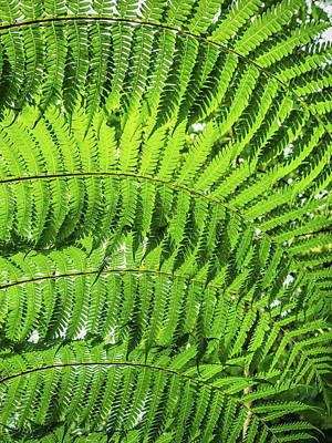 Photograph - Fern by Nick Bywater