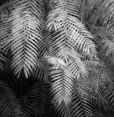 Botanical Photograph - Fern Variations In Infrared by Andreina Schoeberlein