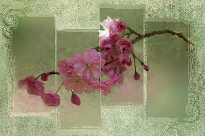 Photograph - Romantic Blossoms 5 by Marilyn Wilson
