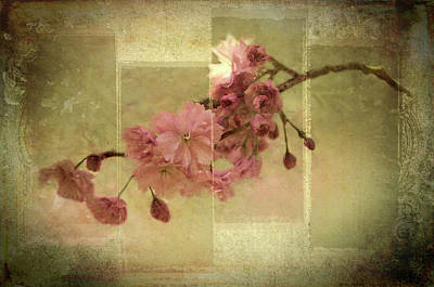 Photograph - Romantic Blossoms 4 by Marilyn Wilson
