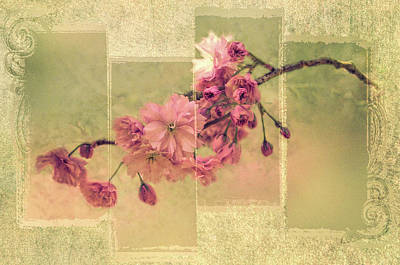 Photograph - Romantic Blossoms 3 by Marilyn Wilson