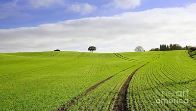 Field In Autumn 2 Original