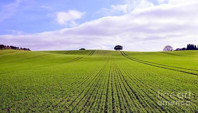 Field In Autumn Original
