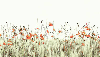 Mixed Media - Field Of Coral Poppies by Susan Maxwell Schmidt