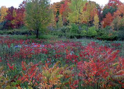 Rock Royalty - Field of Fall Colors by David T Wilkinson