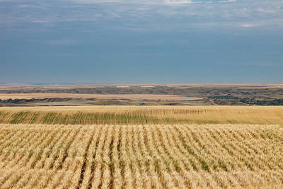 Photograph - Field Of Organic Wheat by Todd Klassy