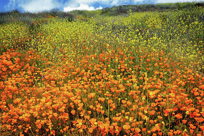 Photograph - Field Of Poppies by Alison Frank