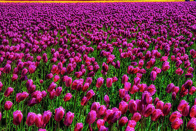 Photograph - Field Of Purple Tulips by Garry Gay