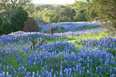 Photograph - Field Of Texas Bluebonnets Skimmed By by Dhughes9