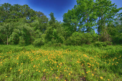 Photograph - Field Of Wildflowers by Crystal Wightman