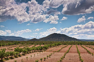 Photograph - Fields And Mountains In Andalusia  by Tatiana Travelways