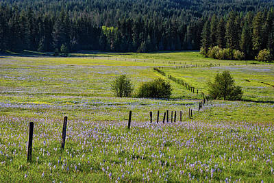 Photograph - Fields Of Blue by Leland D Howard