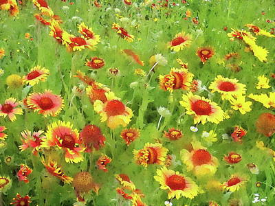 Photograph - Fields Of Gold - Wildflowers by Andrea Kollo