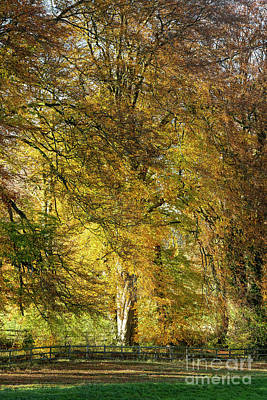 Photograph - Fiery Autumn Beech by Tim Gainey