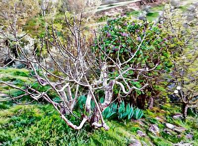 Photograph - Fig Tree In Spring by Dorothy Berry-Lound