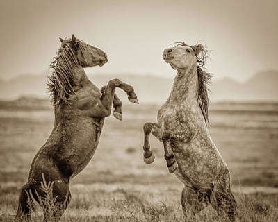 Photograph - Fighting Stallions 2 by Mary Hone