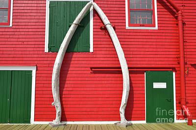 Photograph - Fin Whale ..lower Jaw Bone by Elaine Manley