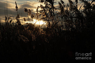 Photograph - Fine Art - Dusk by Jenny Potter