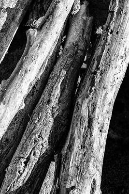Photograph - Fine Art Of Driftwood by Joseph S Giacalone