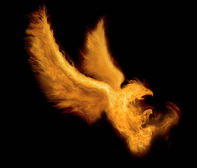 Bird Digital Art - Fire Bird by -asi