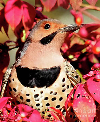 Photograph - Fire Bush Flicker by Debbie Stahre