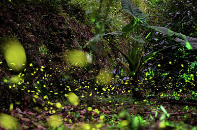 Photograph - Firefly by Jun