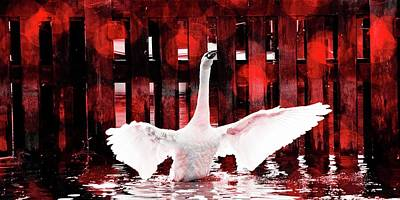 Photograph - Firery Swan by Pete Hunt