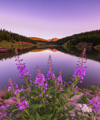 Moody Trees - Fireweed Sunset by Darren White