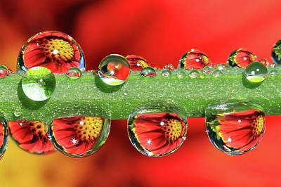 Water Droplets Sharon Johnstone - Firey Drops by Gary Yost