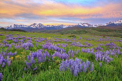 Royalty-Free and Rights-Managed Images - First Blush Gore Range  by Bridget Calip