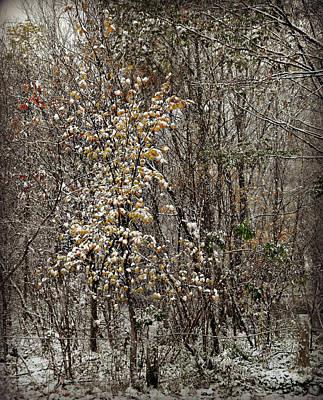 Photograph - First Snow Fall 2 by Cyryn Fyrcyd
