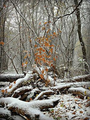 Photograph - First Snow Fall 4 by Cyryn Fyrcyd
