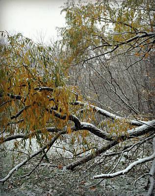 Photograph - First Snow Fall 5 by Cyryn Fyrcyd