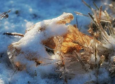 Art Print featuring the photograph First Snow, Leaves And Light by Tatiana Travelways