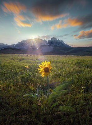 Photograph - First To Arrive / Spring / Augusta, Montana  by Nicholas Parker