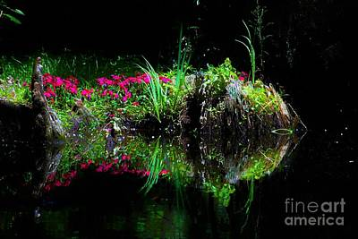Photograph - Fish Was This Big by Merle Grenz