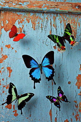 Insect Photograph - Five Butterflies by Garry Gay