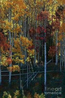 Photograph - Flames Of Autumn by Jim Garrison