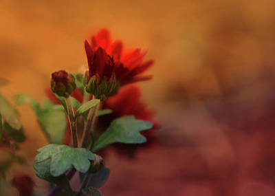 Photograph - Flaming Red by Dan Urban