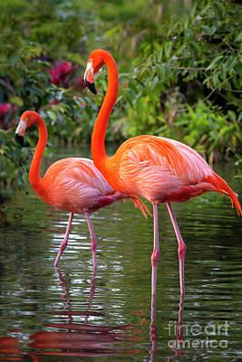 Photograph - Flamingo Pair II by Brian Jannsen