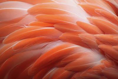 Photograph - Flamingo by Santa2030
