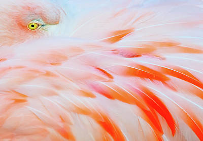 Photograph - Flamingo by Tom Winstead