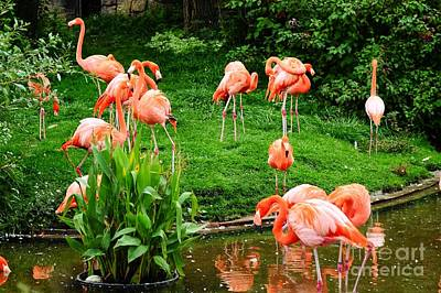 Photograph - Flamingos by Elaine Manley