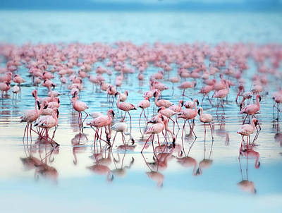 Flamingoes Art Print by Grant Faint