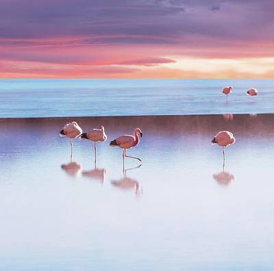 Flamingoes In Bolivia Art Print by Ingram Publishing