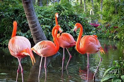 Photograph - Flamingos IIi by Brian Jannsen