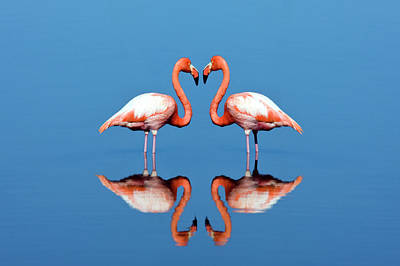Standing Photograph - Flamingos by Steve Allen