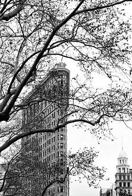 Photograph - Flat Iron Through The Trees by Cate Franklyn