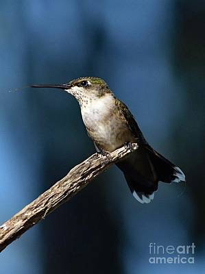 Abstract Airplane Art - Flick of The Tongue - Ruby-throated Hummingbird by Cindy Treger