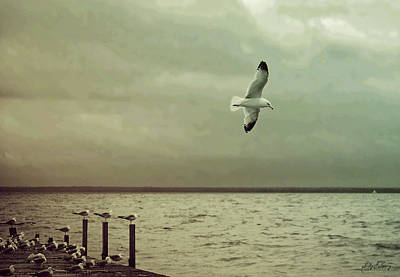 Photograph - Flight Of Freedom by Sally Sperry